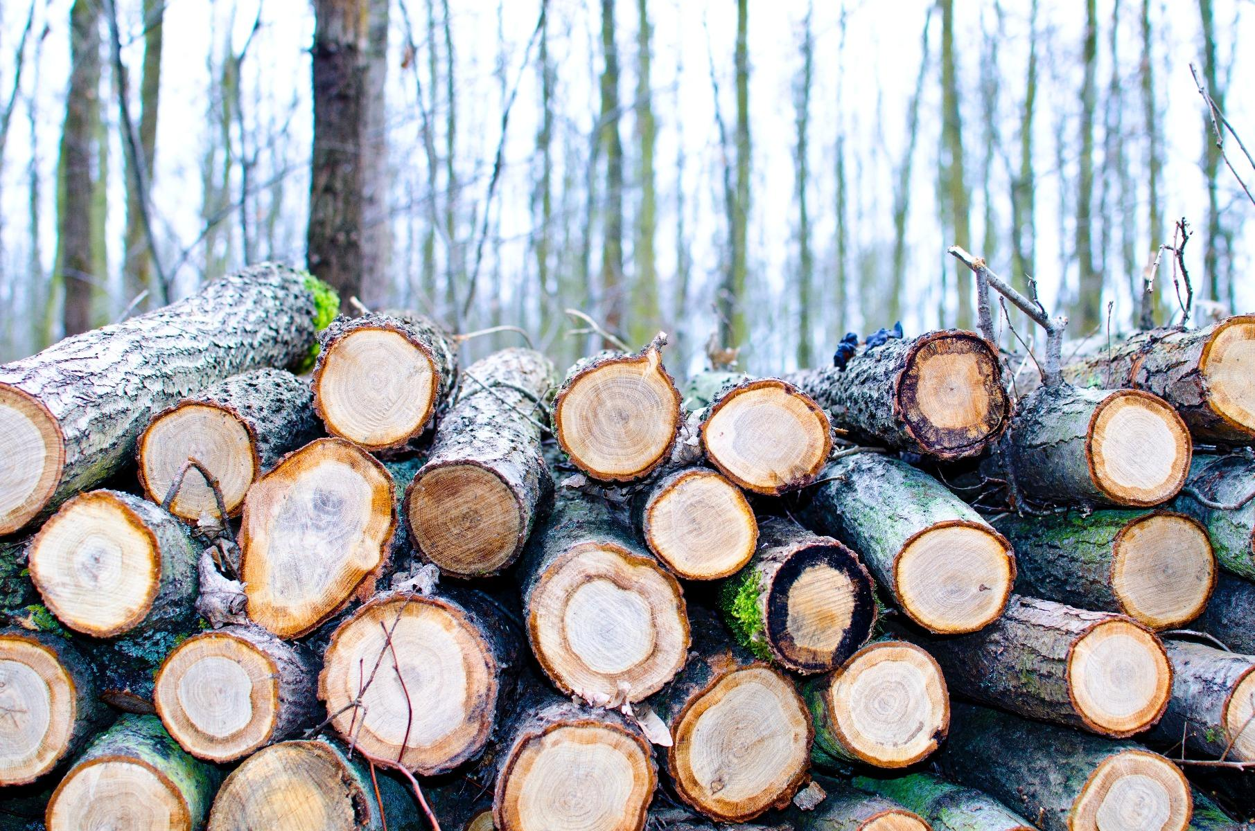 Minimal Impact Logging How To Take The Trees Youll Use Without